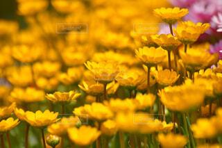 花のクローズアップの写真・画像素材[4319108]