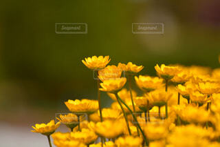 花のクローズアップの写真・画像素材[4319109]
