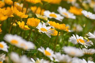 花のクローズアップの写真・画像素材[4319110]