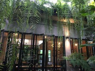 カフェ,自然,緑,ガラス,光,オシャレカフェ,おしゃれカフェ,森のカフェ