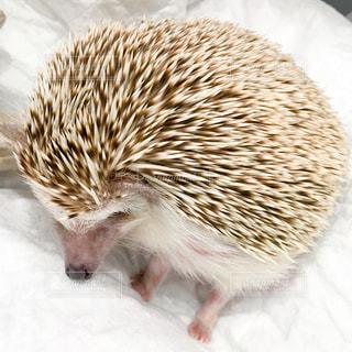 雪の中で小さな茶色の動物の写真・画像素材[722545]