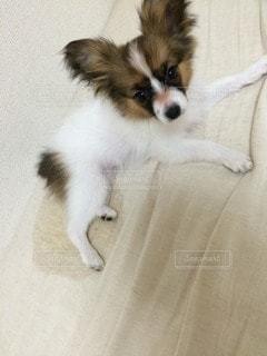 犬の写真・画像素材[45426]