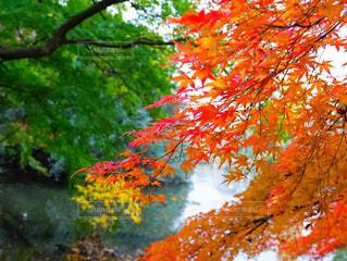近くの木のアップの写真・画像素材[1653244]