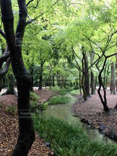 京都,糺の森,清らか,美しい流れ,静謐な場所