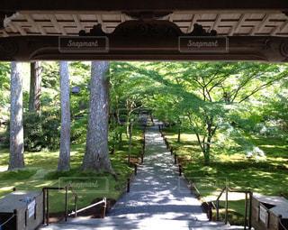 京都,木漏れ日,三千院,美しい緑,苔の庭,清き場所