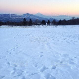 雪,足跡,寒い,ホワイト,真っ白