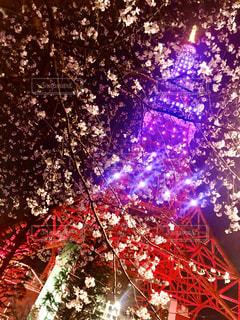 桜,花見,夜桜,東京タワーと桜,都会の花見