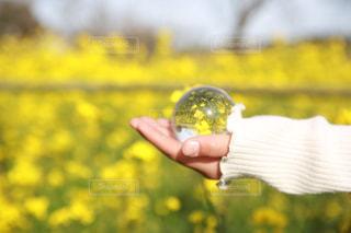 花,春,カメラ女子,黄色,菜の花,お花,子供,人物,旅行,写真,一眼レフ,水晶,撮る,インスタ映え