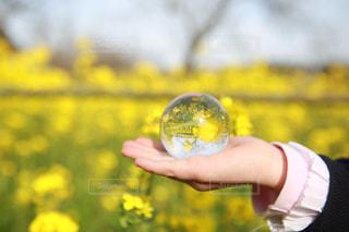 花,春,カメラ女子,カラフル,黄色,菜の花,お花,子供,人物,旅行,写真,一眼レフ,黄,水晶,yellow,撮る,インスタ映え