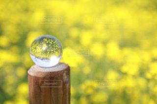 花,春,カラフル,黄色,菜の花,お花,観光,旅行,写真,一眼レフ,黄,水晶,yellow,撮る,インスタ映え