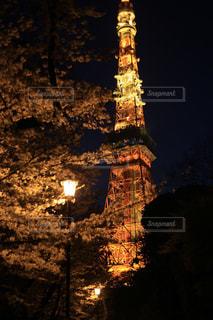 花,春,桜,東京タワー,夜,屋外,東京,カラフル,暗い,お花,観光,お花見,桜道,一眼レフ,インスタ映え