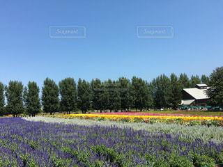 富良野の写真・画像素材[1362462]