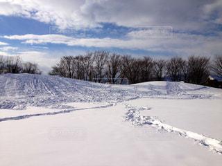 自然,空,公園,冬,雪,白,北海道,山,足跡,樹木,札幌,ホワイト,あしあと