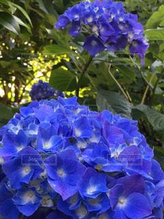 花の写真・画像素材[548755]
