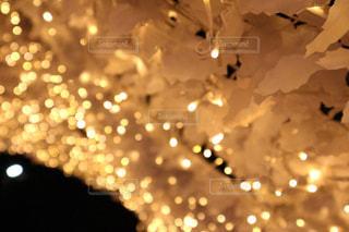 クローズ アップの光のの写真・画像素材[917515]