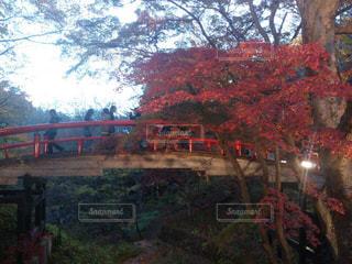橋の写真・画像素材[551371]