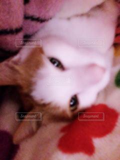 近くに猫のアップの写真・画像素材[996173]