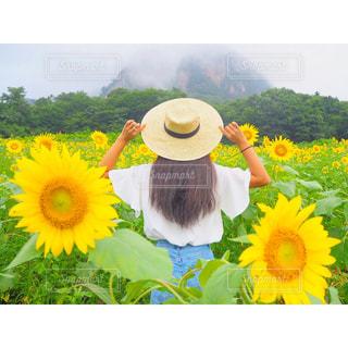 黄色の花の写真・画像素材[907926]