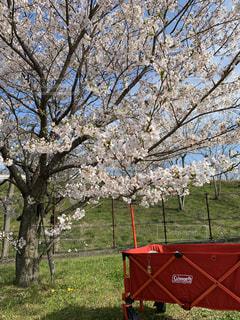 桜の写真・画像素材[3068872]