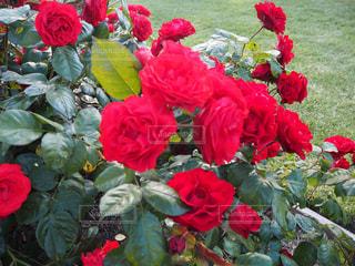 花の写真・画像素材[553512]
