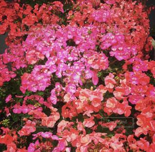 近くの花のアップ - No.810433