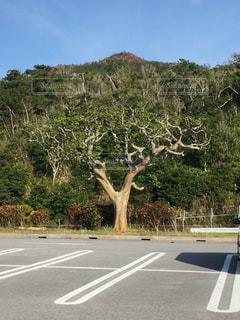 通り側の木と空の道 - No.900084