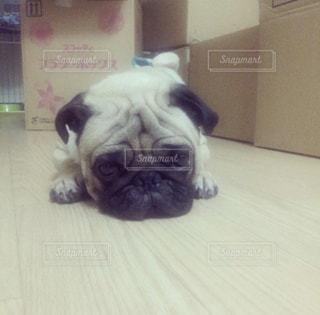 床の上に横たわる小さな黒い犬 - No.973500