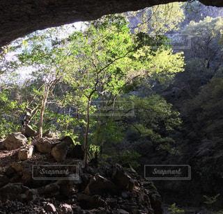 森の真ん中に岩の島 - No.973822