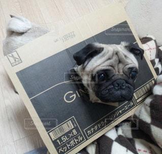 本の上に座って犬 - No.973831