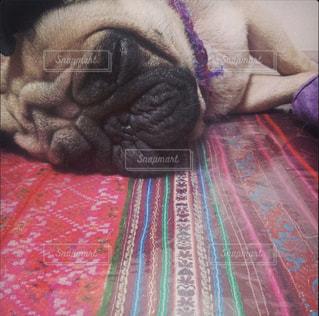 ベッドの上に横たわる犬の写真・画像素材[1263049]