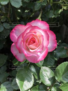 近くの花のアップの写真・画像素材[1370239]