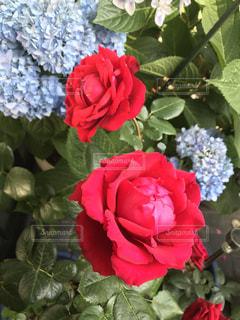 近くの花のアップの写真・画像素材[1370848]