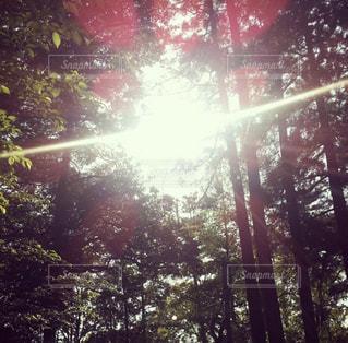 近くの木のアップの写真・画像素材[1404003]