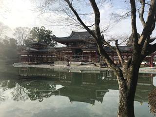 京都,観光,平等院鳳凰堂