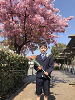 花,春,花見,入学式,さくら,卒園式