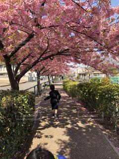 花,春,青空,花見,天気,入学式,卒業式,さくら