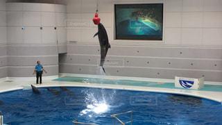 イルカの写真・画像素材[681041]