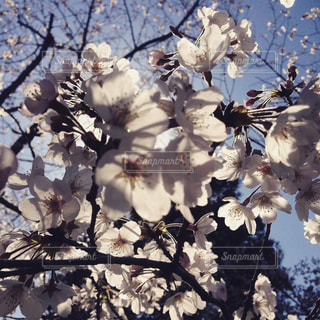 木の花の花瓶の写真・画像素材[801736]