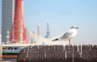 建物の前に立っている鳥の写真・画像素材[721428]