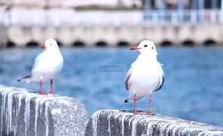 水の体の前で鳥の立っています。の写真・画像素材[721429]