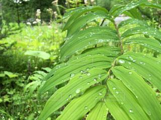 緑の植物の写真・画像素材[811945]