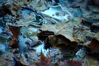 近くに一枚の紙のアップの写真・画像素材[813986]