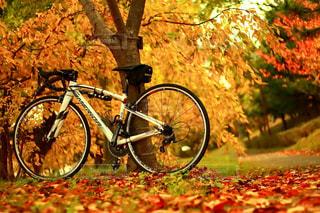 木にもたれて自転車の写真・画像素材[840562]