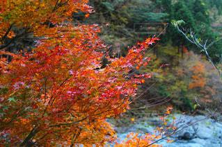 フォレスト内のツリーの写真・画像素材[869744]