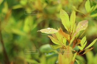 近くの花のアップの写真・画像素材[965686]