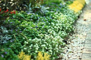 小さな花の写真・画像素材[1368231]