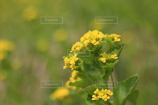 近くの花のアップの写真・画像素材[1368264]