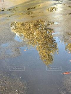 水の中の紅葉の写真・画像素材[850123]