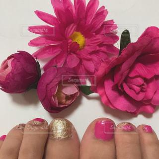ピンクの花のグループの写真・画像素材[903842]