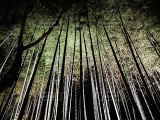 夜の竹林の写真・画像素材[906480]